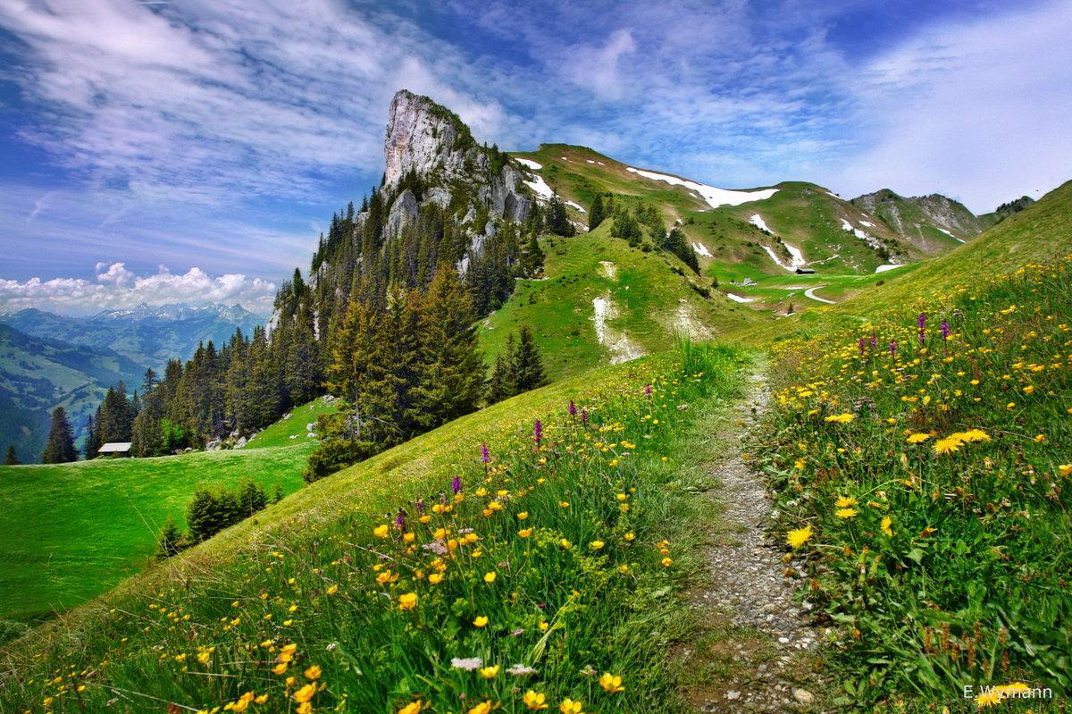 Альпийскими луга богаты различными цветами и травами