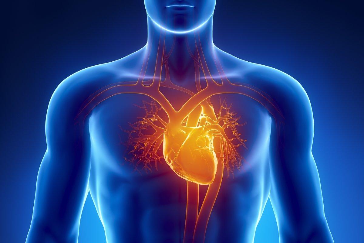На фото показано где находится сердце человека