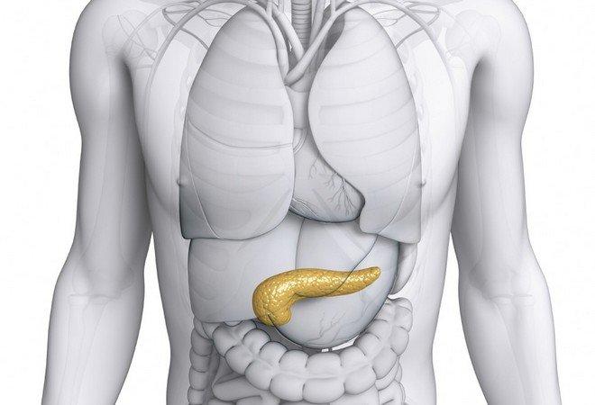 Фото расположения поджелудочной железы