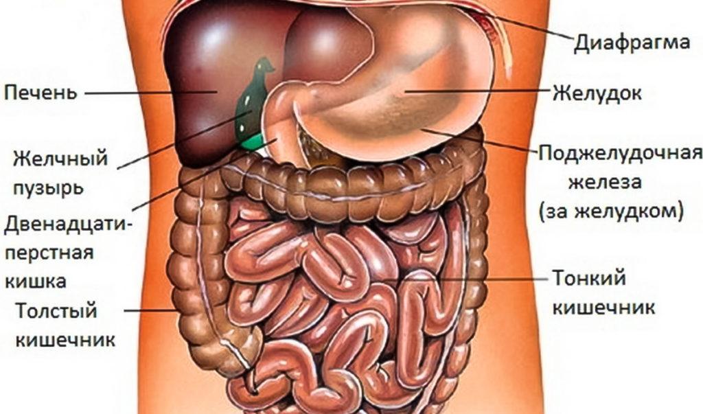 Где находится желудок у человека? Какой отдел желудка болит? Симптомы.