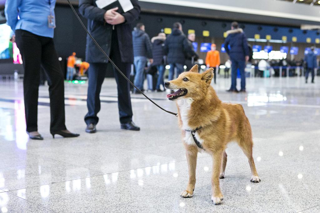 собака Сулимова