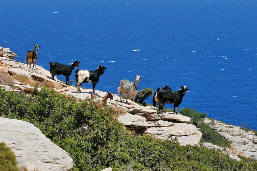 Где находится остров Крит?