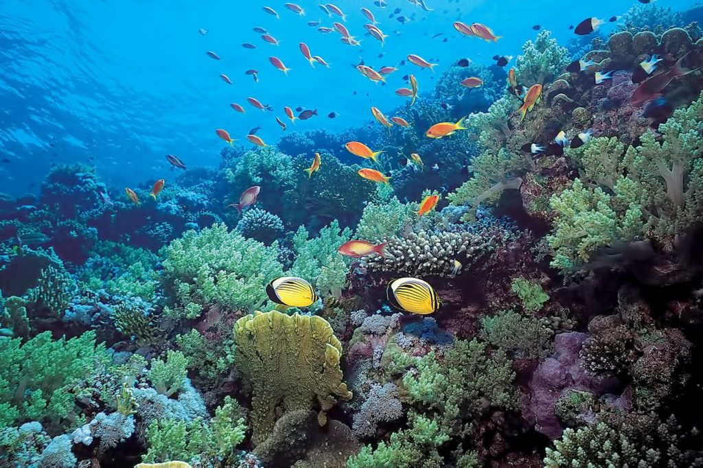 Где находится остров, море Фиджи на карте?